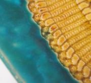Ceramiczne-misy-Kroschel-311
